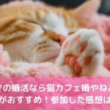 猫好きの婚活なら猫カフェ婚やねこんかつがおすすめ!参加した感想は?