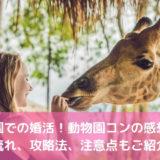 動物園での婚活!動物園コンの感想は?流れ、攻略法、注意点もご紹介