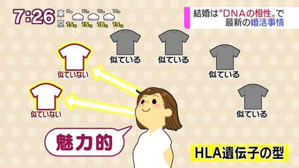 HLA遺伝子の型が似ていないTシャツを好む女性